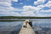 Dog on the Cottage Dock — Stock Photo