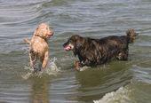 Psi hrají — Stock fotografie