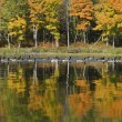 Geese on the Autumn Lake — Stock Photo #34415743