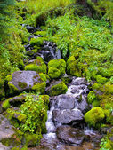 Mossy rocks along creek. — Stock Photo