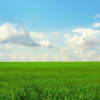 Green field and the blue sky — Stock Photo