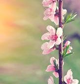 Oddział z różowe kwiaty — Zdjęcie stockowe