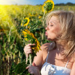 Girl with a flower in the sunflower — Stock Photo