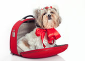 Furry dog in a bag — Stock Photo