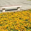 Wooden decking with bench and flowers — Stock Photo