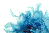 Blue plumage — Stock Photo