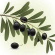 Black olives branch — Grafika wektorowa
