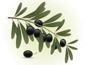 Black olives branch — Stock Vector