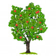 Stock Vector: Apple tree with fruits.