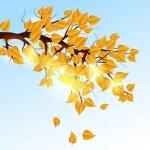 Autumn tree branch — Stock Vector