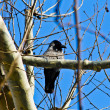 Stock Photo: Bird in Twigs