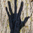 Stock Photo: Hand Shadow