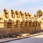 Rams in the Karnak temple in Luxor, Egypt — Stock Photo
