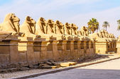 Rams in the Karnak temple in Luxor, Egypt — Stock Photo
