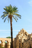 Palm and ruins in the Karnak temple in Luxor, Egypt — Stock Photo