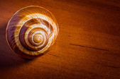 Snail Shell — Stock Photo