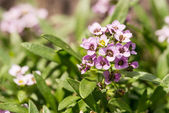 Little Pink Flowers — Stockfoto