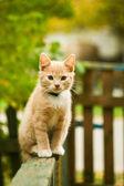 The Kitten — Stock Photo