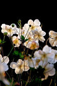 : White flowers — Stock Photo
