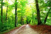 Camino del bosque — Foto de Stock