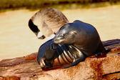 Seal — Zdjęcie stockowe
