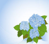 Background with hydrangea — Vettoriale Stock