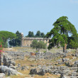 Paestum - 1 of 20 — Stock Photo