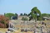 Paestum - 1 van 20 — Stockfoto