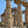 Greek temples of Paestum — Stock Photo