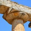 Greek temples of Paestum — 图库照片