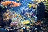 Acuario con peces y corales — Foto de Stock