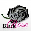 Black rose vector on white background — Stock Vector