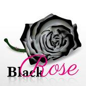 Czarna róża wektor na białym tle — Wektor stockowy