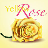 Card with Yellow Vector Rose on Background — Stock Vector