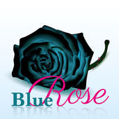 Blue Rose On white Background with Text — Stok Vektör