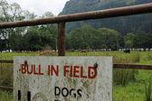 Schotse highland vee — Stockfoto