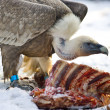 Vulture eating — Stock Photo