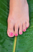 Woman foot in beauty treatment — Stock Photo