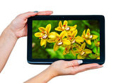 Woman hands with tablet — Stock Photo