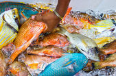 Tropical fish on ice — Stock Photo
