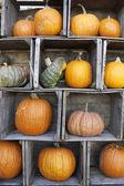 Fall Pumpkins — Stock Photo