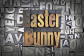 Easter Bunny — Foto Stock