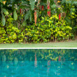Tropical garden with swimming pool and exotic flowers. — Stock Photo #21104489