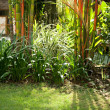 Still life of a tropical garden with bamboo on a sunny morning. — Stock Photo