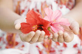 Close up of a girl's hands holding and offering red and pink hibiscus flowers. — Stock Photo