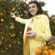 Sophisticated woman reaching for an orange from a tree — ストック写真