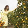 Sophisticated woman reaching for an orange from a tree — Stock Photo