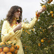 Young woman picking an orange from a tree — Foto Stock