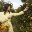 Young woman reaching for an orange from a tree — Stock Photo