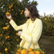 Young woman picking an orange from a tree  — Stock Photo